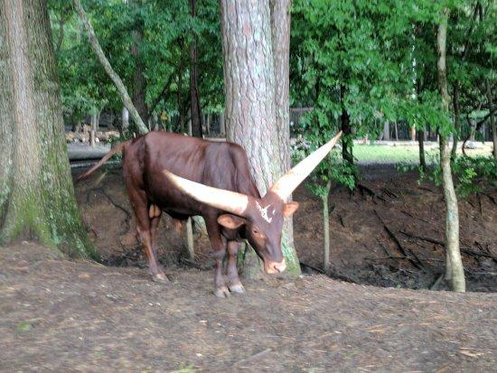Harmony Park Safari: IMG_20170703_153226_large.jpg