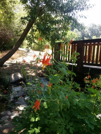 Oak Glen, CA: Columbines and a cool shady creek.