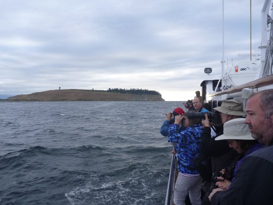 Puget Sound Express - Day Trips : Spotting birds off Protection Island