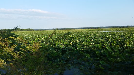 Middle Amana, IA: Lilly Lake in bloom