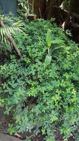 Grecia, Costa Rica: Vegetación en Café del Patio