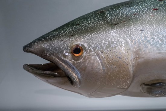Tacoma, WA: Salmon by Raven Skyriver