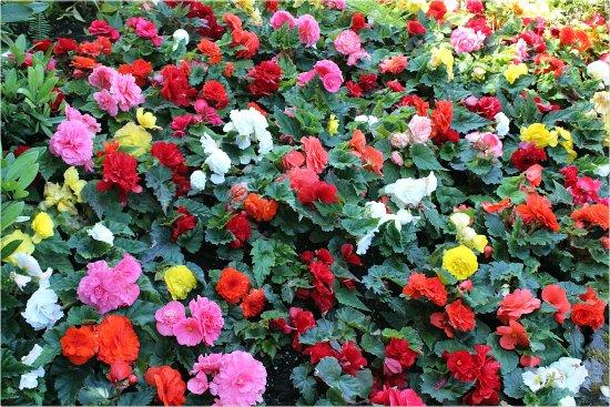 Butchart Gardens: Flowers