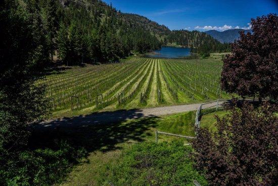 Okanagan Falls, Καναδάς: Nighthawk Vineyards