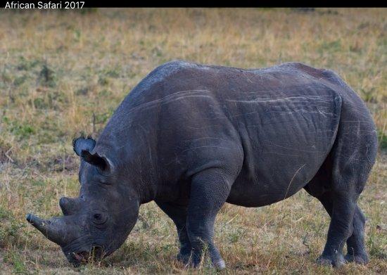 Oldarpoi Mara Camp : the endangered black rhino