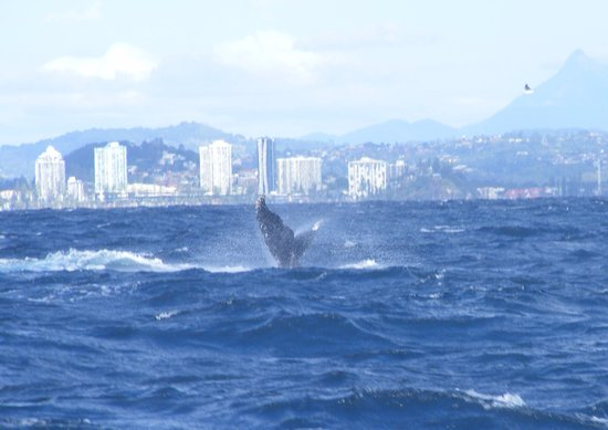 Tweed Heads, Australia: Whales tail