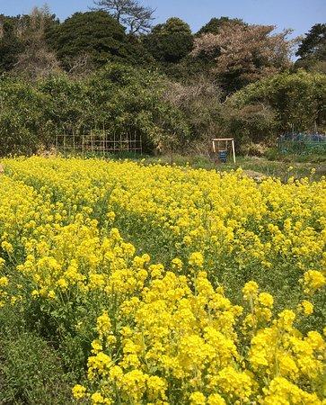 Shiogama Photo
