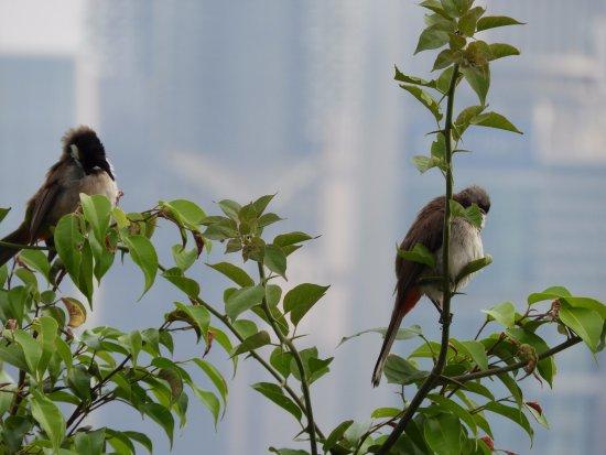 Shenzhen Lianhuashan Park: Birds near top
