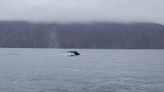 Husavik, Iceland: humpback whale