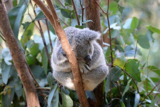 Currumbin, Australia: So sleepy!