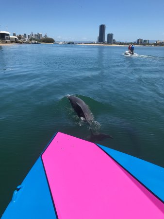 GC Jet Boating: Dolphin sighting!