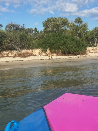 GC Jet Boating: The Wallaby we saw.
