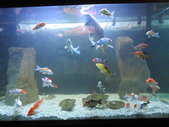 Aquarium Terrarium