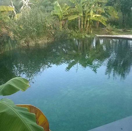 Cestas, Francia: La piscine naturelle et les palmiers