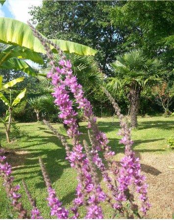 Cestas, Francia: La beauté du jardin fleuri