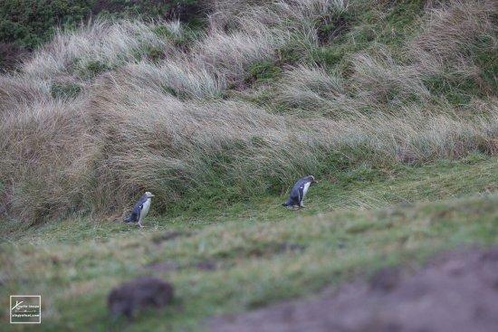 Penguin Place: 可愛的企鵝歸巢