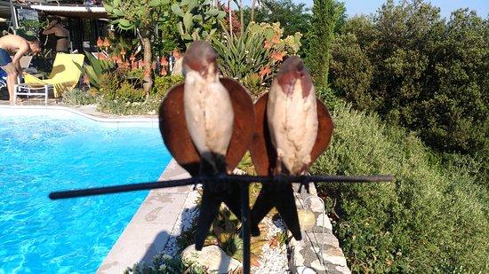 B&B Villa Amaranta Photo