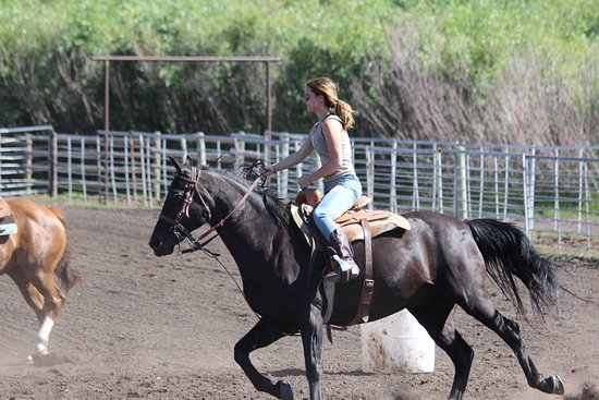 Wilson, WY: Barrel racing on a horse named cole.