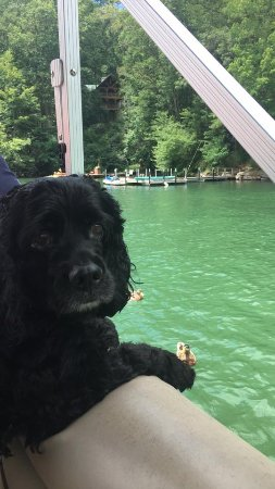 Glenville, Kuzey Carolina: Pets welcome on the boats!