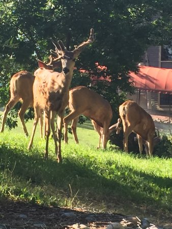 DoubleTree by Hilton Durango: Wildlife outside the hotel