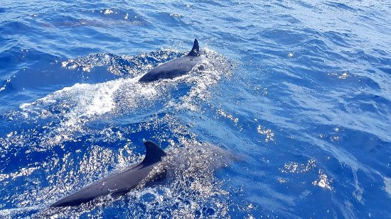 Thulusdhoo Island: Dolphin watching in Indian Ocean