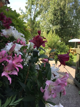 Robertsbridge, UK: Amazing lilies planted by our fabulous gardener Owen Clutton