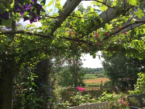 Robertsbridge, UK: Just love the way the clematis is growing through the vine over the pergola