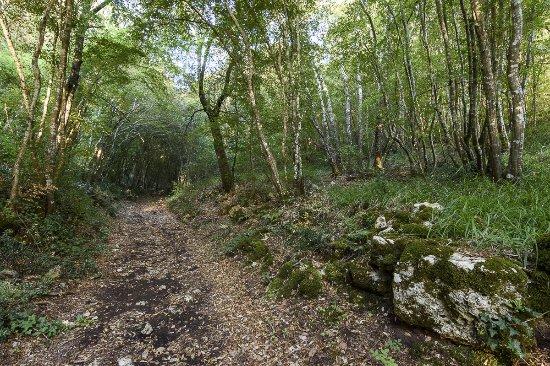 Riserva Naturale Bosco delle Pianelle