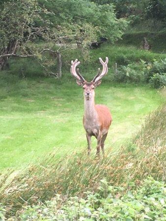 Lochranza, UK: photo0.jpg