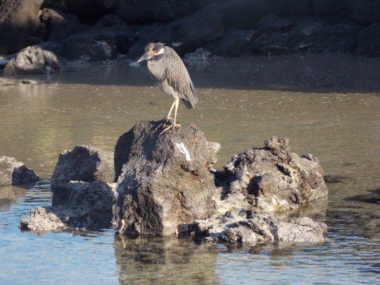Genovesa, Ecuador: darwin bay