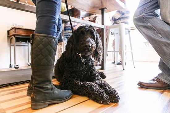 Carlton, Oregón: Dog friendly