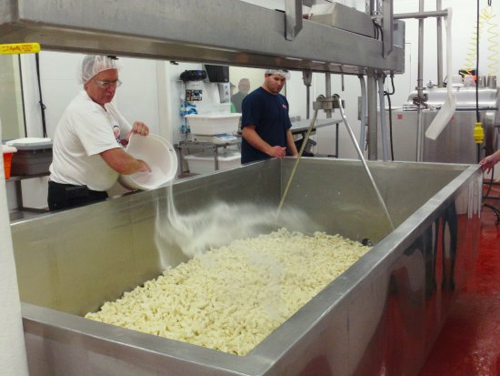 Waukon, IA: Salting fresh cheese curds. Set up a tour or take a self-guided walk down our viewing halllway.