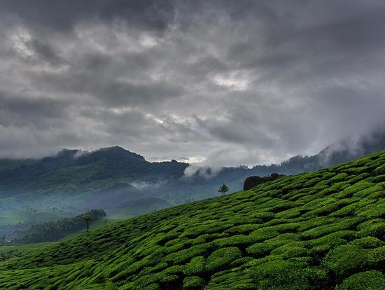 Thodupuzha, India: Munnar - Kerala Private Tour
