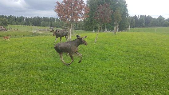 Eksjo, Sweden: Skullaryd safari