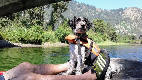 Leavenworth, WA: Our dog Bandit enjoyihng the tubing