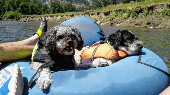 Leavenworth, WA: Frankie and Bandit chillaxing