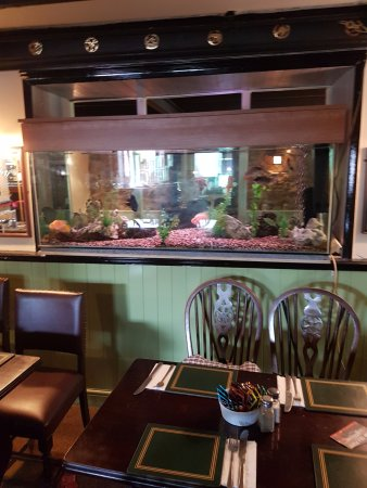Scorrier, UK: a large aquarium in the pub