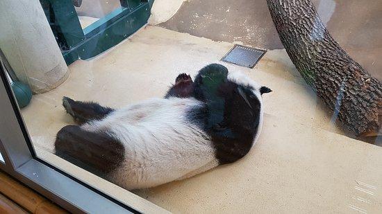 Tiergarten Schoenbrunn - Zoo Vienna : 20170716_112124_large.jpg
