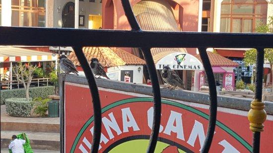 Iguana Cantina: 20170713_182717_large.jpg