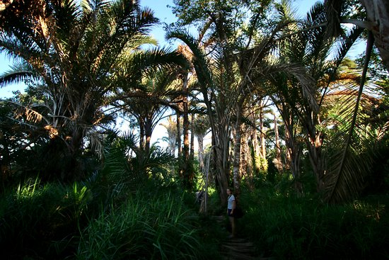 Maputaland Coastal Forest Reserve, Republika Południowej Afryki: Raffia Palm Forest walk