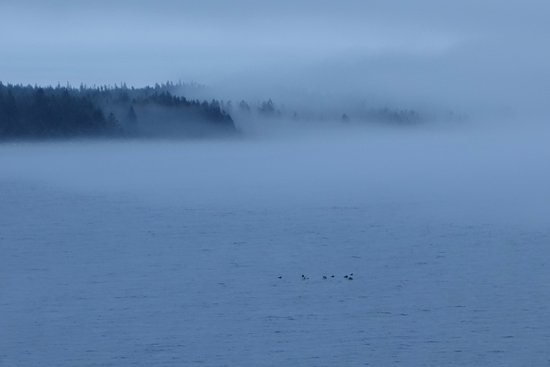 LaHave, Canada: Ducks & fog - zoom to NE from deck
