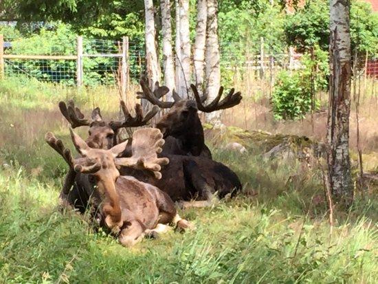 Kosta, Suécia: photo0.jpg