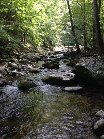 Tyro, Virginie : photo2.jpg