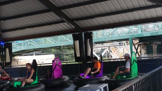 Westminster, CO: bumper cars