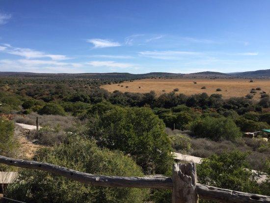 Amakhala Game Reserve, Sudafrica: photo0.jpg