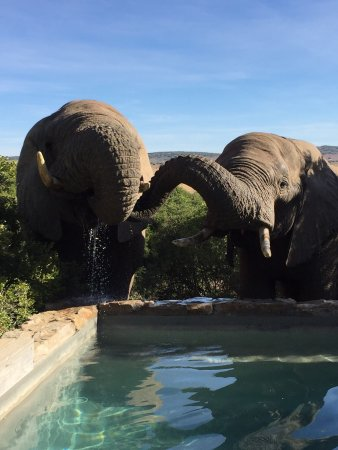 Amakhala Game Reserve, Sudáfrica: photo1.jpg