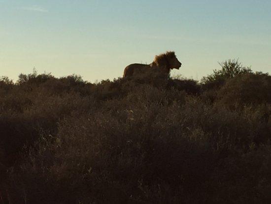 Amakhala Game Reserve, Sudafrica: photo2.jpg