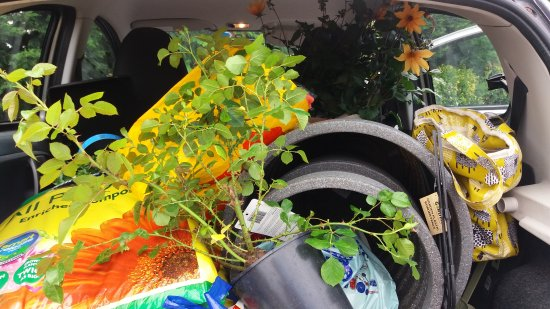 Planters At Bretby Logo Picture Of Planters At Bretby Garden - Cool cars bretby