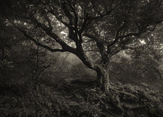 spooky tree along the way picture of craggy gardens asheville