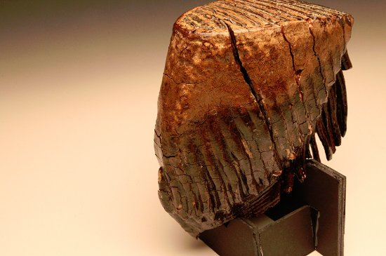 Elkins, Batı Virjinya: Photo of a mammoth tooth in the gallery